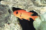 Fish - Take an underwater adventure with our aquarium store and saltwater fish tanks in Salinas, California.
